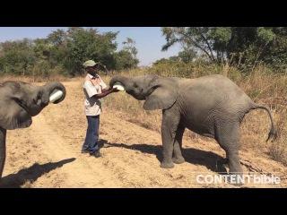 Baby Elephants drinking milk