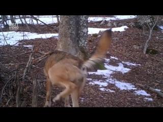 Камера на протяжении года снимала одну точку в лесу.