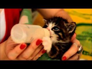 Крохотный котенок с большим аппетитом сосет молоко из бутылочки