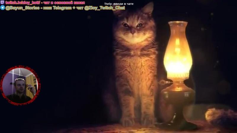 Вечерний стрим с котом