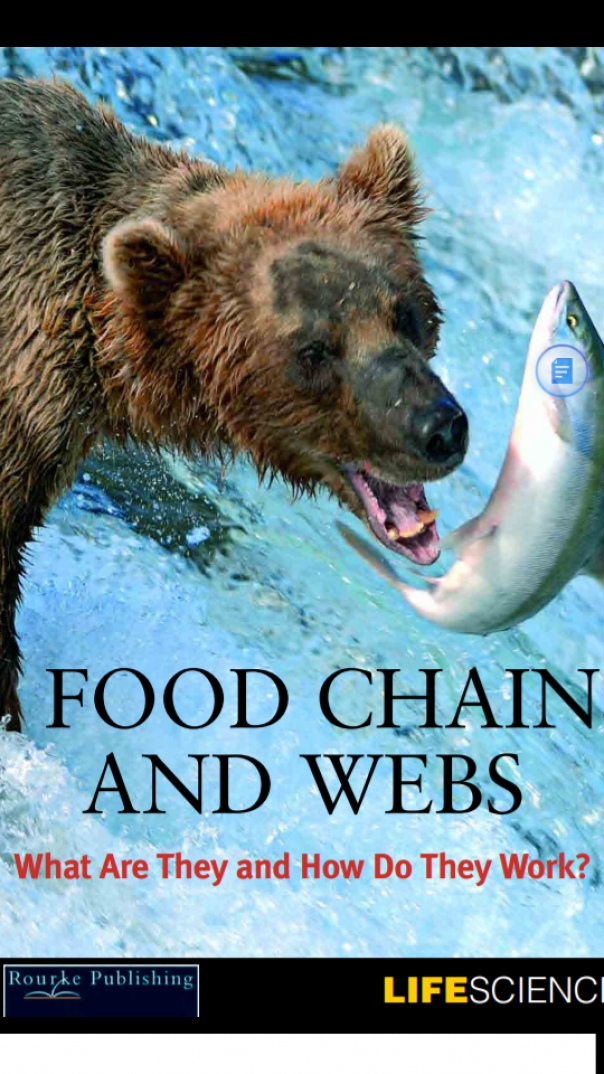 Food Chains and Webs What Are The