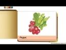 Овощи и фрукты. Часть 1. Изучаем овощи и фрукты. Раннее развитие. Развивающее видео для малышей. Карточки Домана.