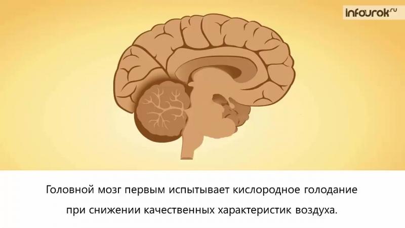 Диета При Кислородном Голодании Мозга. Кислородное голодание. Способы увеличения кислорода в домашних условиях