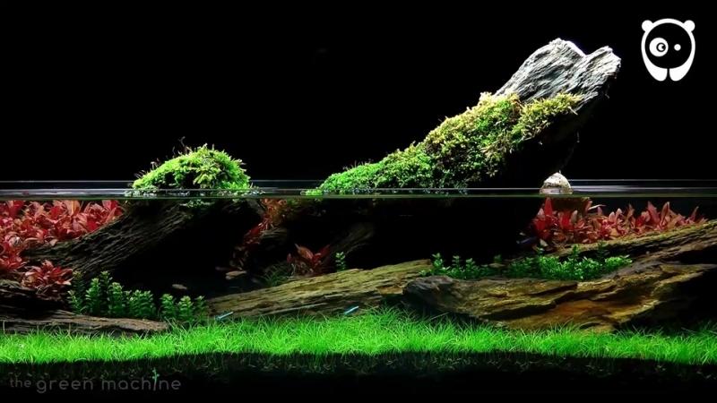 Ему нет равных искусство декорирования аквариумов от Джеймса Финдли