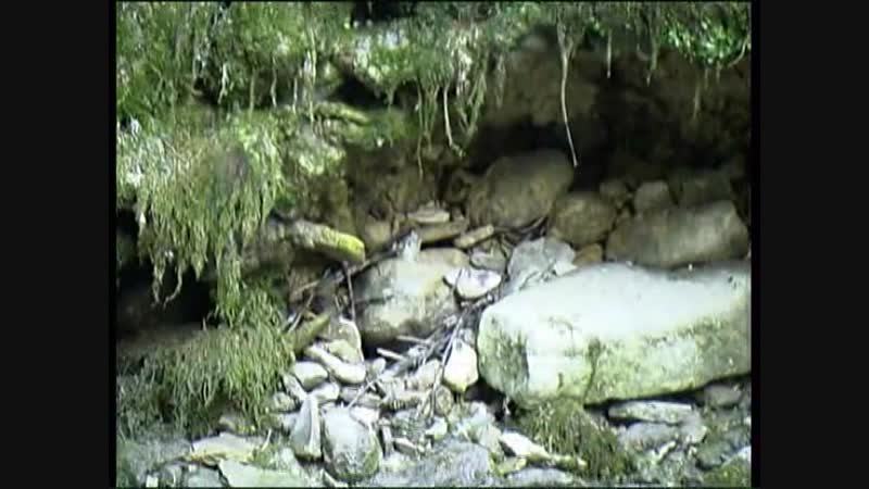 Galitsin SexKeyRU 004 Forest Nymphs Katerina Olesia