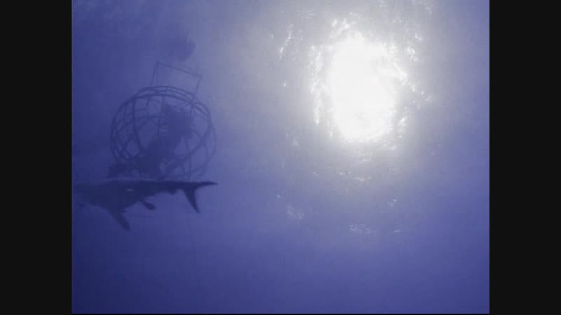 BBC Прогулки с морскими чудовищами 2003 1 Серия