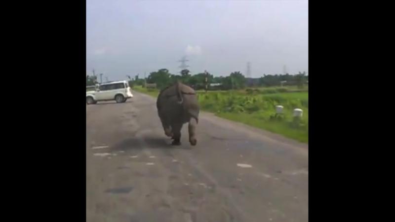 Носороги среди нас El rinoceronte entre nosotros смотреть онлайн без регистрации