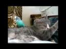 Смешные кошки приколы про кошек и котов 2017 12 (Спящие Коты и Белка)