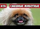 Побег собаки в переноске эти смешные животные 13 Bazuzu Video ТОП подборка май 2017