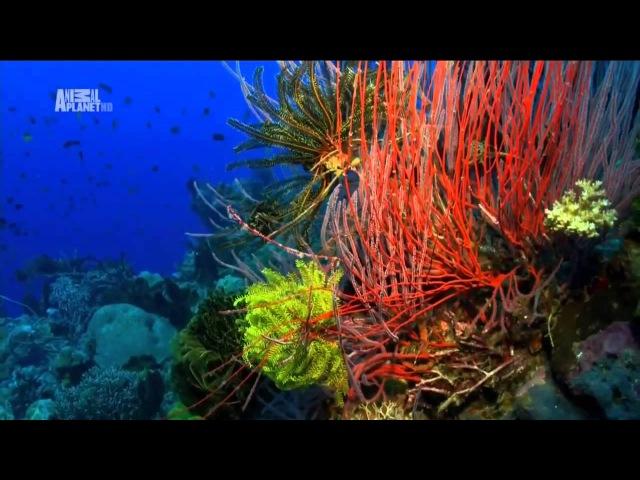 Чудеса голубой планеты Австралия и Океания xeltcf ujke jq gkfytns fdcnhfkbz b jrtfybz