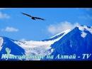 Полет Коршуна в Курайской степи на Алтае в 4K.