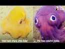 Funny Scientists Freak Out Over Crazy-Looking Sea Animals | The Dodo