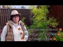 Разнообразие клёнов 🍁 Момидзи по русски 🍁 Красивая осень 🍁