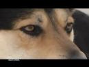 Владимир Захаров (Рок Острова) На кольцевой (песня про верного пса)