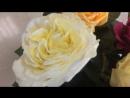 Садовые голландские розы 😍