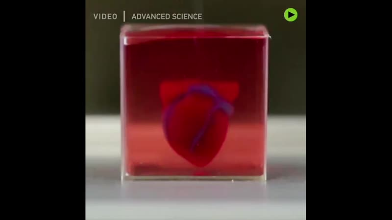 Israel ische Forscher drucken erstmals Mini Herz aus menschlichem Gewebe Mehr Infos ➡️ 1var