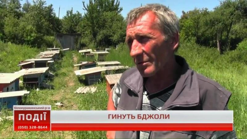 Події UA Донбас В Білокуракинських пасічників гинуть бджоли 18 06 2018