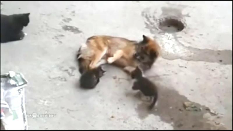 Fynni dogs