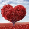 Пульс и  нарушения ритма сердца.