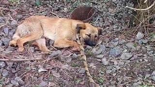 🔴Загадочная история привязанного в лесу пса...