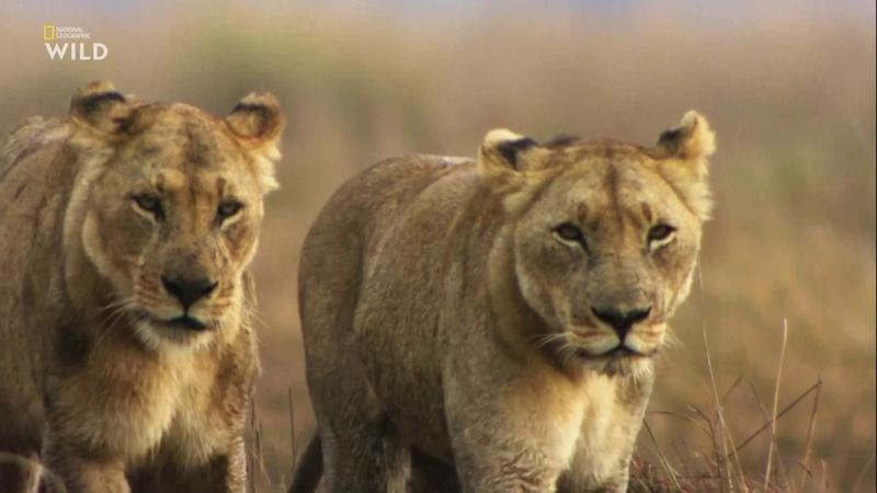 Nat Geo Wild: Смертоносная Африка. Степи 2018