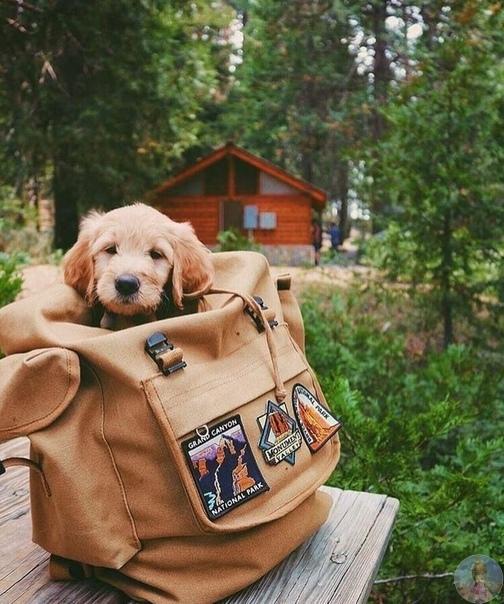Счастливые собаки путешественников