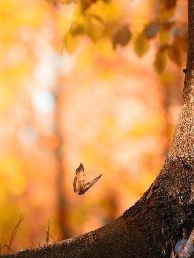 Осень цвет тепла!