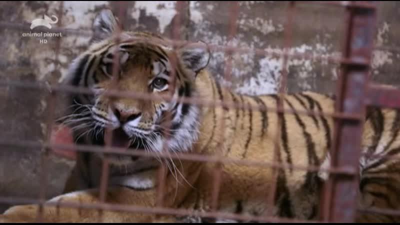 AnPl Спасение диких животных Wild Animal Rescue 2017 1