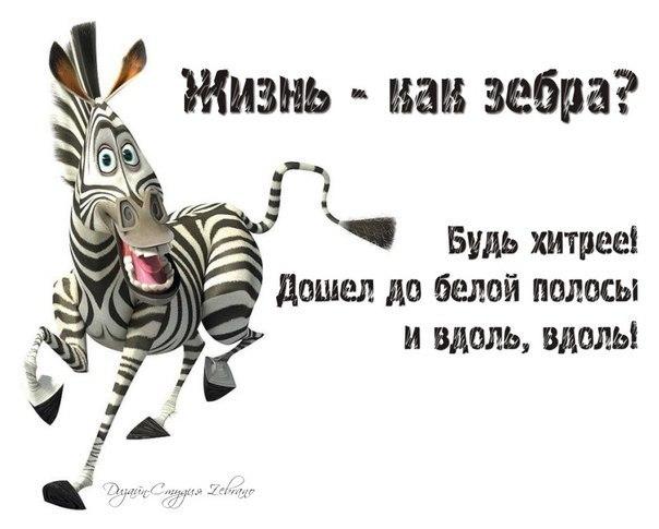 мэра подольска поздравления про зебру табаков