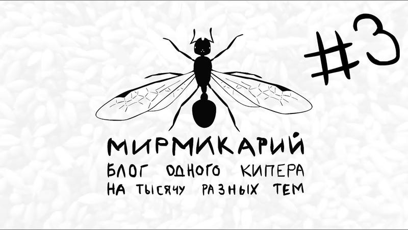 3 Жуки чернотелки: знахарь, мучник и зоОфобас