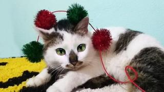 Кошка Карамелька и котенок Мурка играют с Лизой