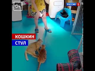 Кот не даёт девушке сесть на стул  Россия 1