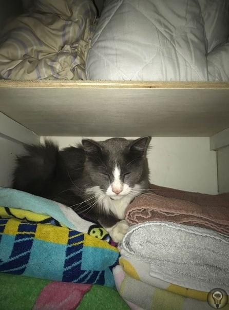 Кот ворует белье у соседей. Хизер Барди из Метайрие (Луизиана, США) опубликовала кадры со своих камер видеонаблюдения, на которых отчетливо видно, что ее кот приносит чужое белье, видимо, ворует