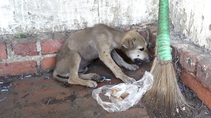 Abandoned Puppy In A Catastrophic State Watch the moment we rescue abandoned puppy