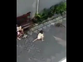 Если вы думали, что вас ничем уже не удивить, то это дерзкое похищение для вас. В Индии обезьяна на велосипеде попыталась украст