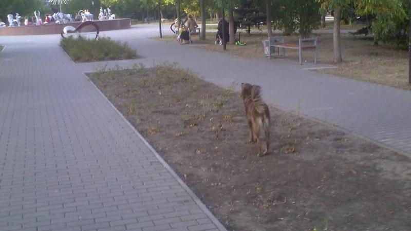 Haită de cîini vagabonzi în parcul plin de copii - Curaj.TV