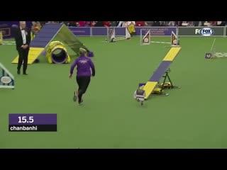 Shrek runs in a dog race
