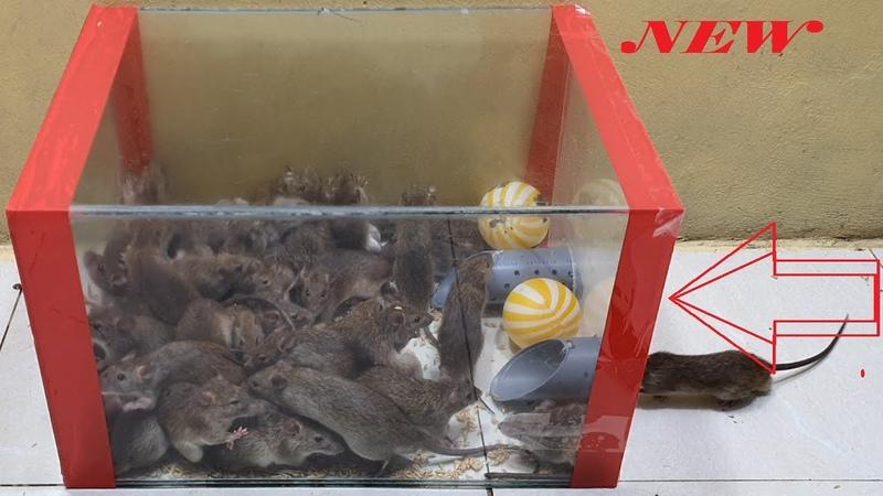 Ide perangkap tikus terbaik dari tabung plastik / perangkap tikus dengan tabung plastik atas