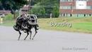 Boston Dynamics Wildcat Robot Run