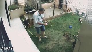 Бразилец подорвал свой двор из-за муравьев