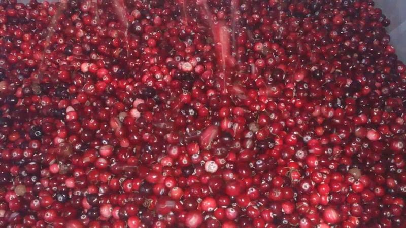 Веялка для очистки ягод Брус 500 Очистка клюквы