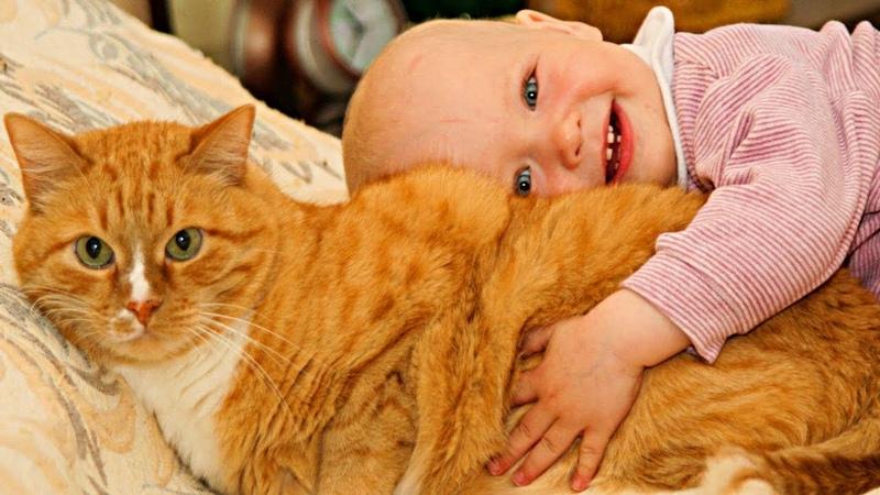 Рыжая кошка нашла подкидыша возле дома! Малыш лежал в свертке под забором и шевелился...