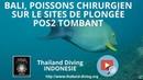 Bali, poissons chirurgien sur le sites de plongée POS2 Tombant avec le club Thailand Diving Pattaya