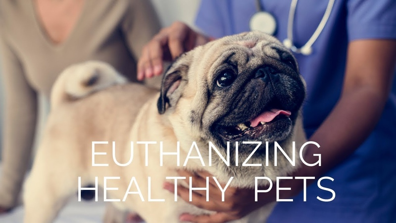 Усыпление здоровой собаки для погребения с хозяином Как такое возможно Healthy Dog Euthanized So She Could Be Buried With Owner