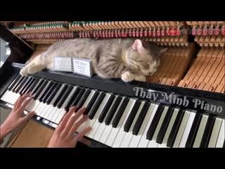 Кот спит на пианино, пока на нем играют