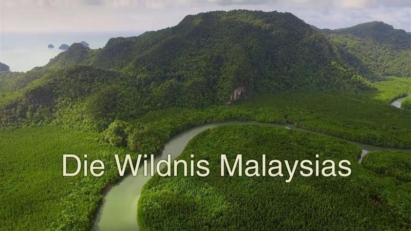 Die Wildnis Malaysias
