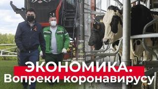 Чипированные коровы // Работа в поле // Крупнейший завод масок // Открытие МФЦ | Губернатор.