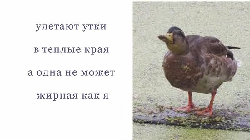 улетают утки в теплые края картинки прикольные запаска