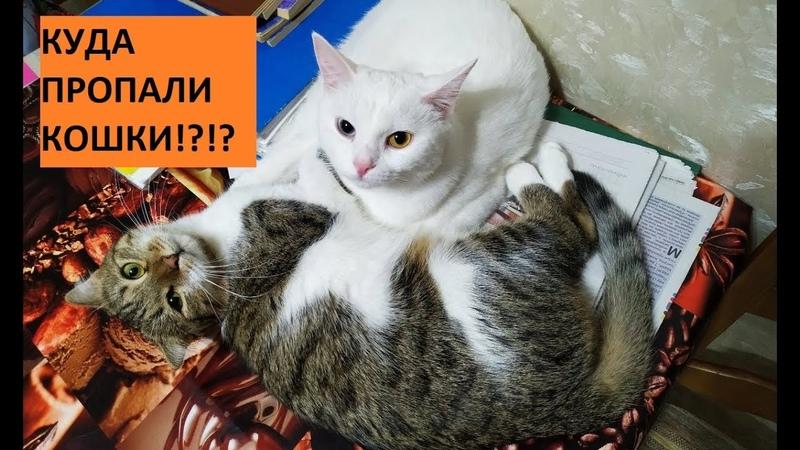Куда пропали кошки Муизза и Азиза!? Кошка - ниндзя; позитив кошки