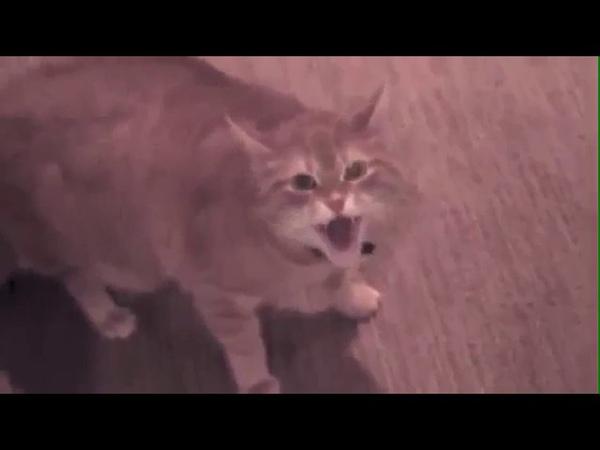 Злой кот не выпускает из ванны